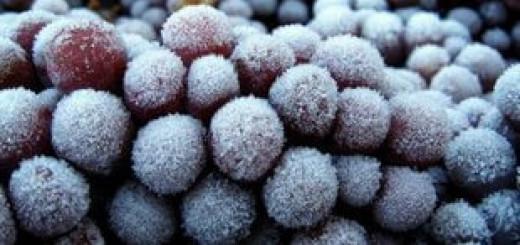 Виноград для айсвайн