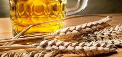 Пиво из пшеницы