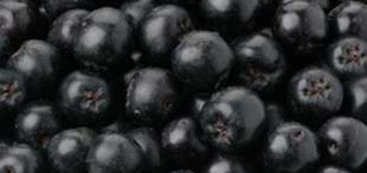 Ягоды черноплодной рябины