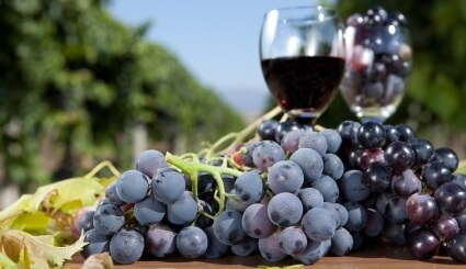 Бокал вина и синий виноград
